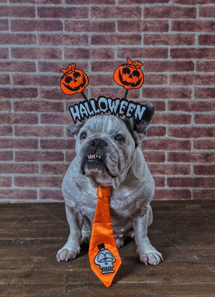 Portrait of French Bulldog with Diadem and Tie Halloween Web3Canvas